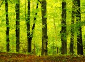 8 Minuten im Wald