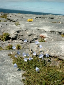 Irland - The Burren